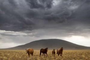 ute_mtn_horses_flat_1165-640
